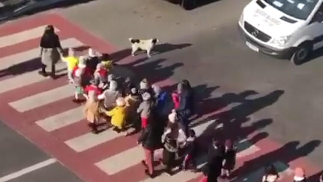 Pies przeprowadza dzieci przez przejście dla pieszych