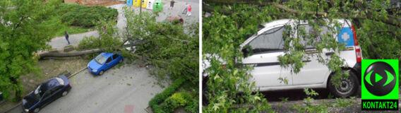 Porywisty wiatr powalał drzewa