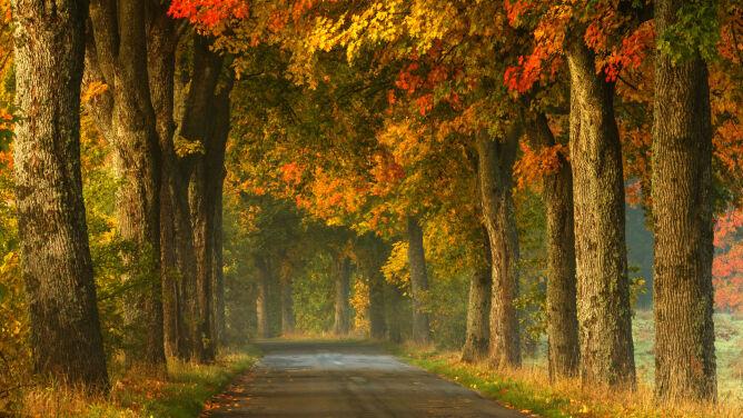 W niedzielę o poranku rozpoczęła się jesień