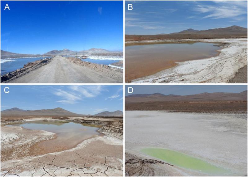 Pustynia Atakama w lipcu 2017 (zdjęcie A) i listopadzie 2017 (zdjęcia B, C, D)